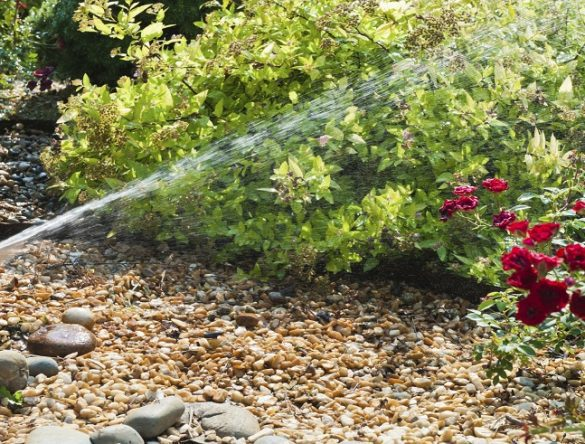 Sprinkler head watering flowers