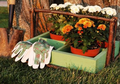Garden Mums ready to plant with tools at the ready.