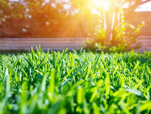Get Your Lawn Ready For Spring