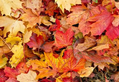 4 Things to Do with Fall Leaves