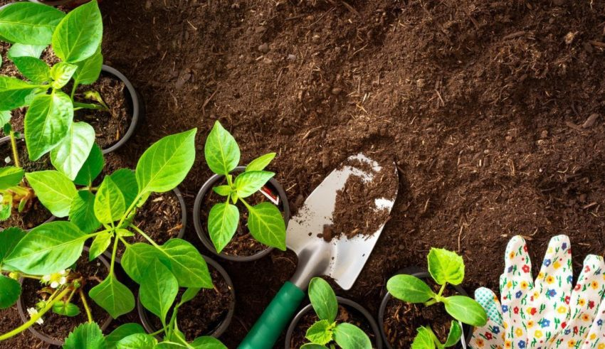 The Guide For First-Time Gardeners