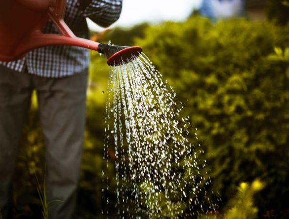 Person watering his garden