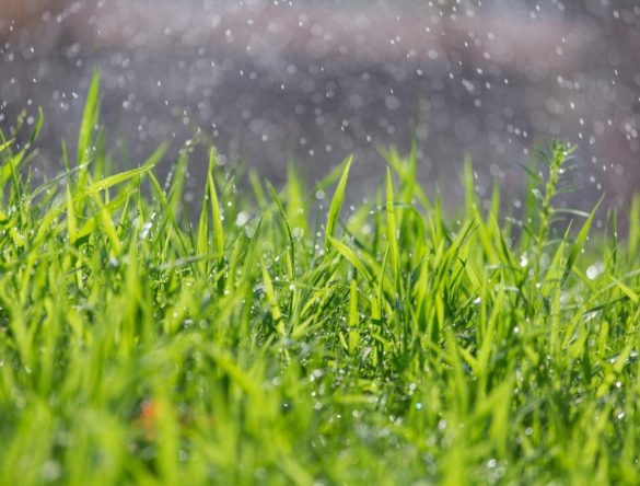 close up of wet grass being watered by sprinklers