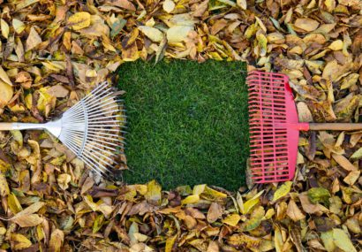 fall leaves on the ground with two rakes moving them in different directions to expose a piece of grass.