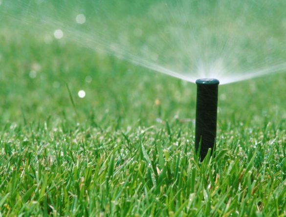 Lawn Care 101: A Seasonal Guide